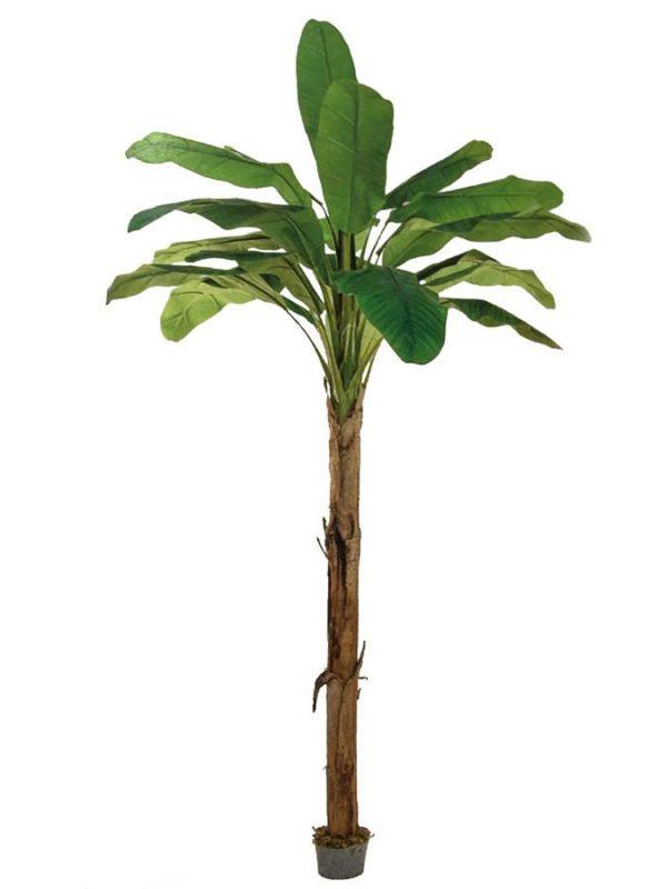 Banāna koks